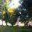 藤川町のサロン・エール様の木を伐採しました